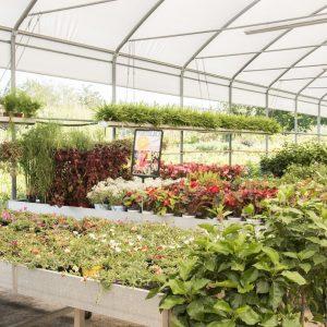 Scelta_piante-esterno