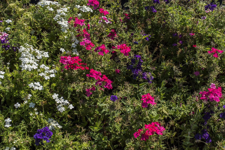 Fiori da esterno mattarana garden for Fiori da esterno