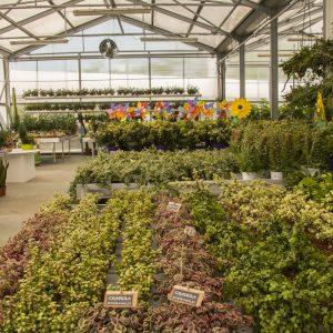 Esposizione_piante