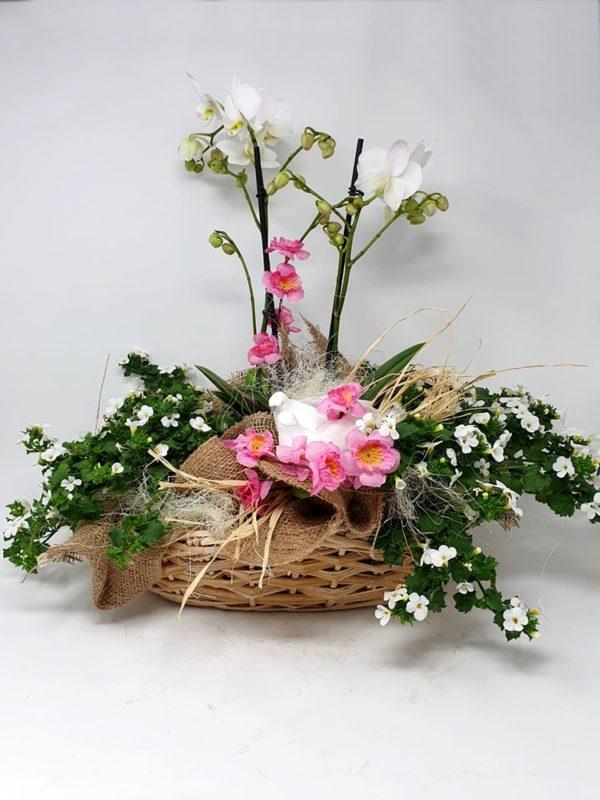 Composizione-cesto-fiori-Orchidea