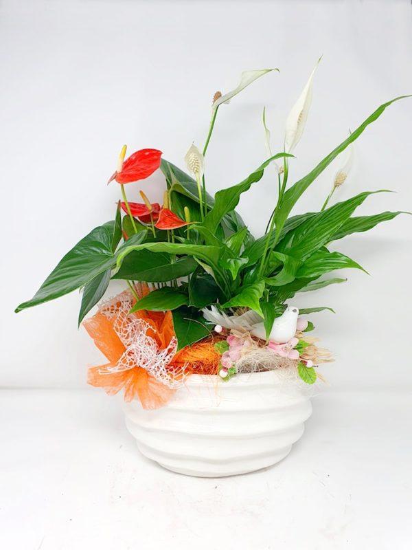 Composizione-fiori-Anthurium